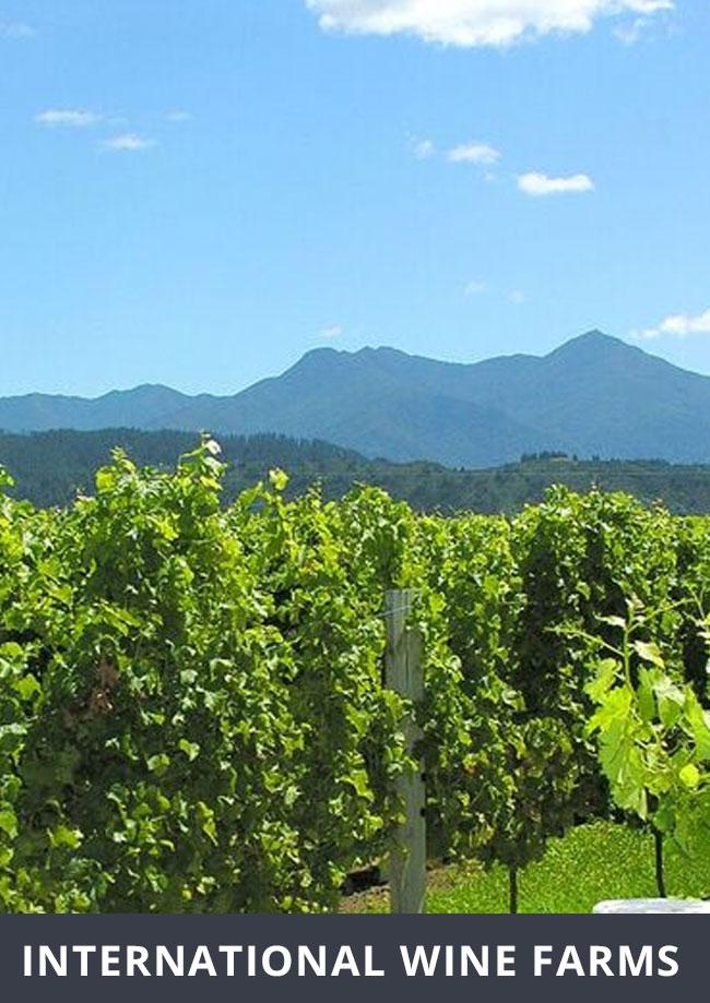 international-wine-farms
