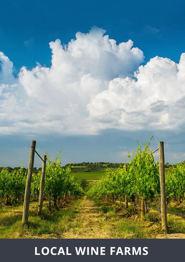 local-wine-farms
