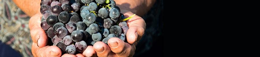 Wine_FrogittandVonkel