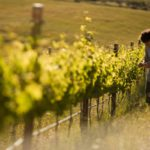 vineyards_waverley_hills-e1428657570808